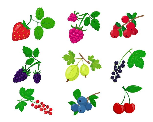Set of different berries isolated