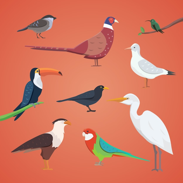 Set of different birds isolated.  collection cartoon birds