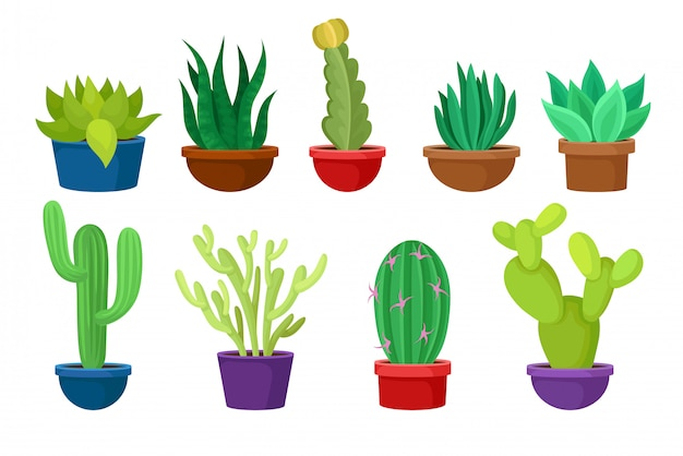 Set of different cacti in colorful ceramic pots.