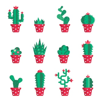 Set of different cactuses