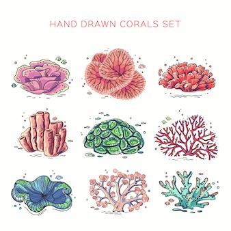 Set of different corals on white