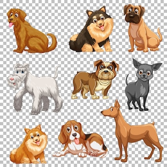 Set of different dogs isolated
