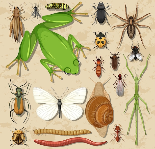 Set of different insects and amphibians on wooden surface