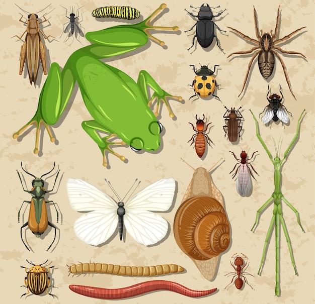 Set di diversi insetti e anfibi su una superficie di legno