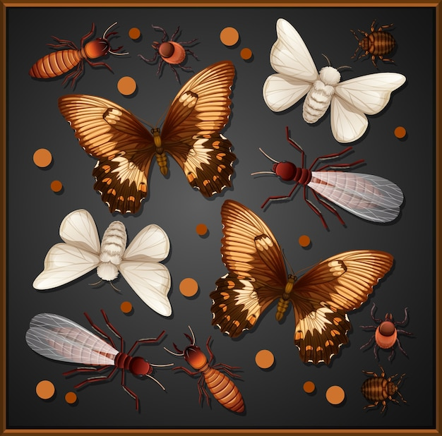 Set of different insects in wooden frame background