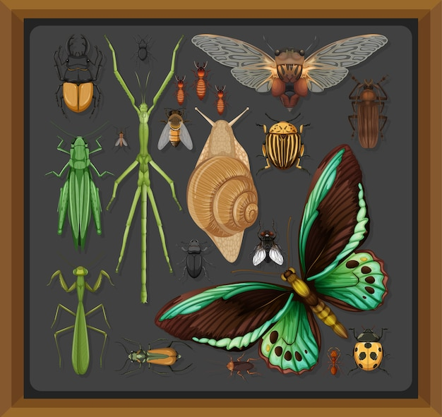 Set di diversi insetti nel telaio in legno