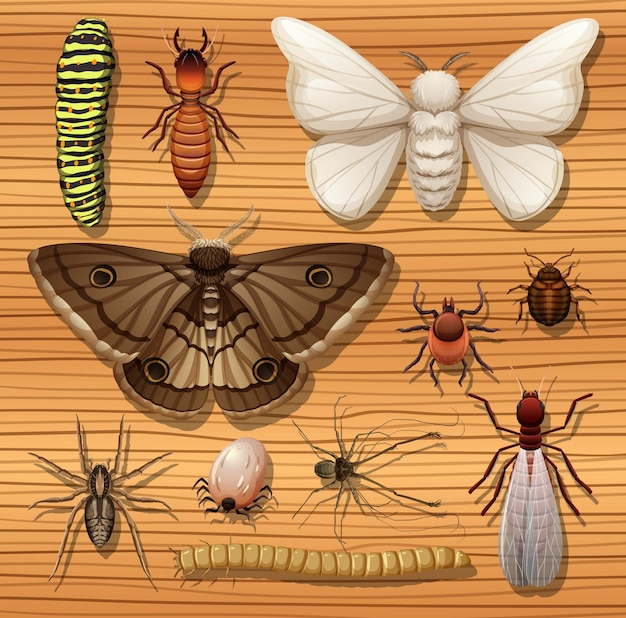 Set of different insects on wooden surface