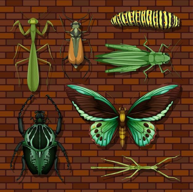 Insieme di diversi insetti su sfondo di carta da parati in legno