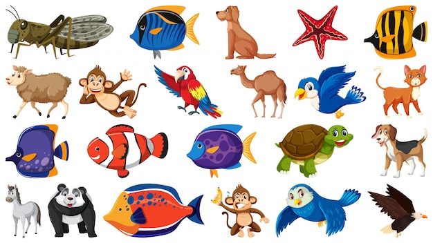 Set of different kinds of fish and birds