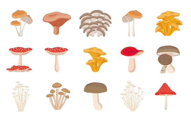 Set of different mushrooms. cep, chanterelle, honey agaric, enoki, morel, oyster mushrooms, king oyster, shimeji, champignon, shiitake, black truffle.