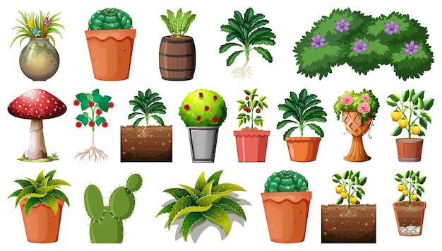 Set of different plants in pots isolated on white background