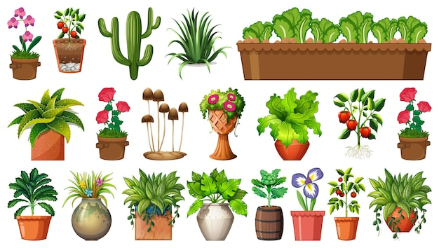 Set of different plants in pots isolated on white