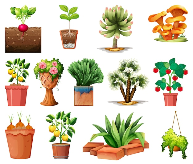 Set of different plants in pots isolated
