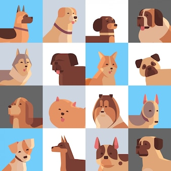Set different purebred dogs furry human friends home pets collection concept cartoon animals set portrait