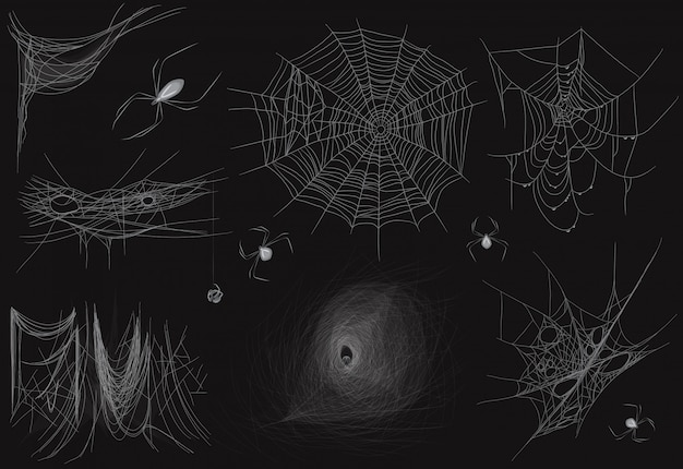 Set of different realistic vector thin spider web