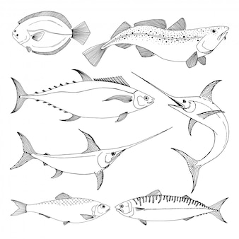Set of different sea fishes.