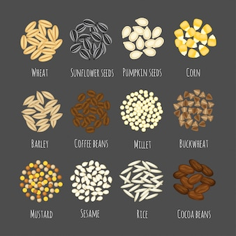 Set of different seeds and grains vector illustration in a cartoon flat style isolated on gray