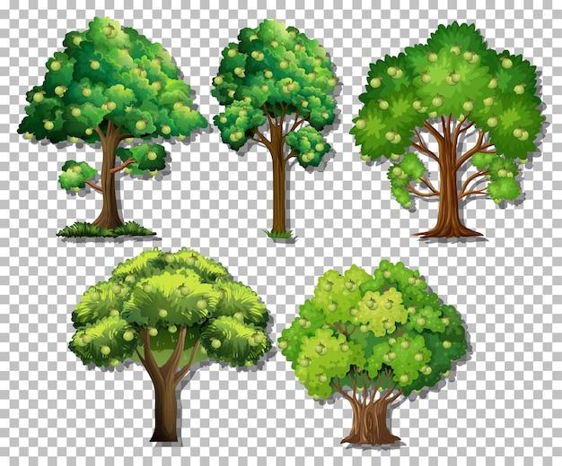 Insieme di alberi diversi su sfondo trasparente