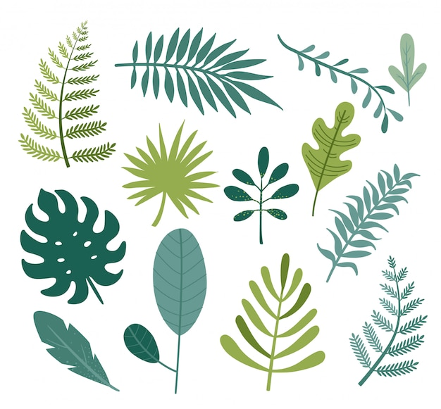 Set of different tropical and other isolated green leaves.