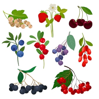 Set of different types of berries on a stem with leaves.  illustration on white background.