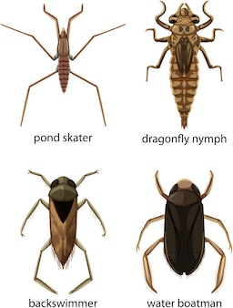 Set di diversi tipi di insetti e coleotteri con nome