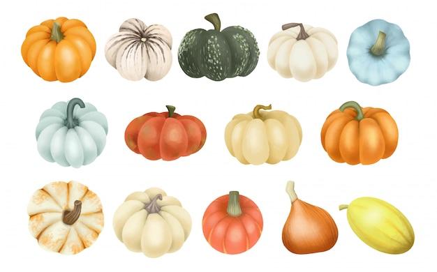 Set of different types of pumpkins