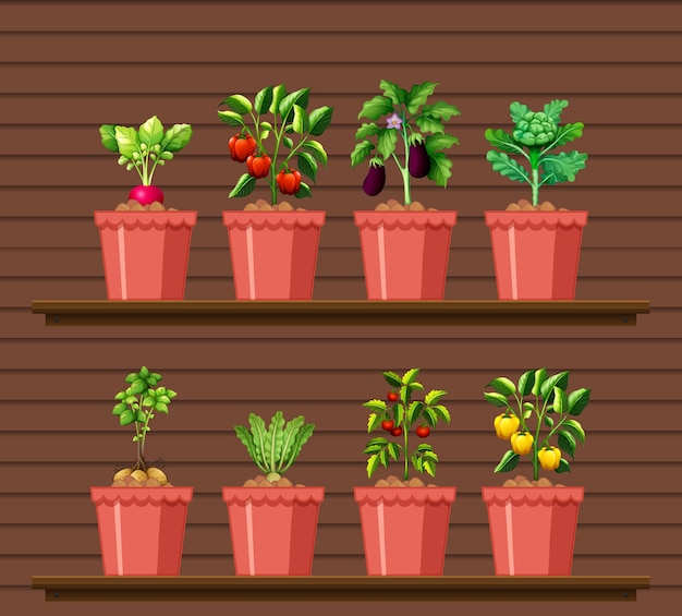 Set of different vegetables in different pot on wood wall shelf