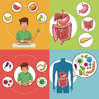 Set of digestive system cards collection