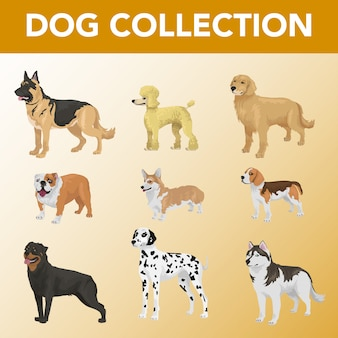 Set of dog breeds collection