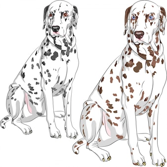 Установить собаку далматинской породы сидя