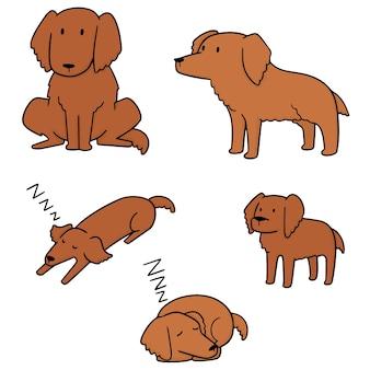 Set of dog, golden retriever