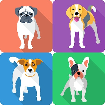 Set dog icon flat design pug and beagle breed