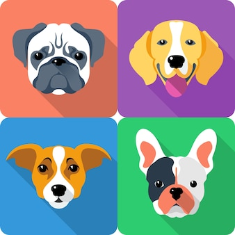 Set dog icon flat design pug and beagle breed Premium Vector