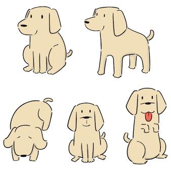 Set of dog, labrador retriever