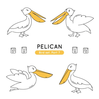 Set of doodle pelicans in various poses isolated