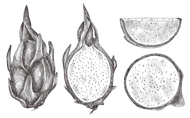 Set of dragon fruit, pitaya, pihaya. hand-drawn.