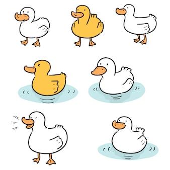 Set of duck