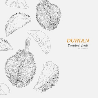 Set of durian