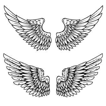 Set of the eagle wings  on white background.  element for logo, label, emblem, sign.  illustration.