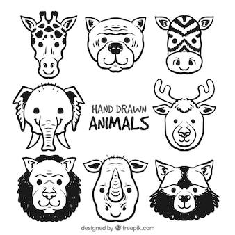 Serie di otto facce di animali disegnati a mano