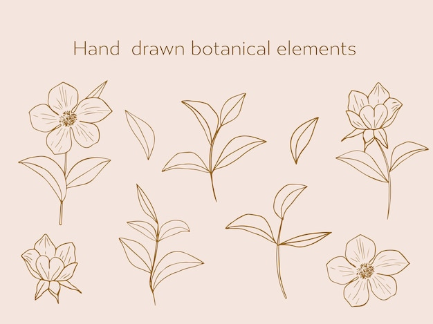 Set of elegant botanical elements in a linear minimalist trendy style