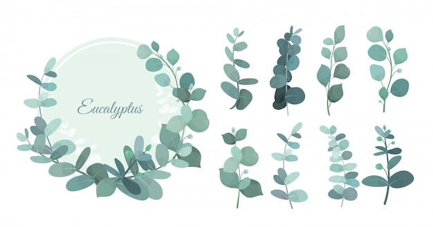 Set eucalyptus leafs, branches. cute herbs for wedding greenery, decorative elements for invintations and greeting cards. blue eucalyptus wreath, leaves and stems in flat style.