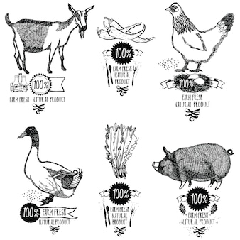 Set farm fresh natural product chicken goat duck pig