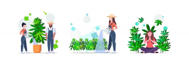 Set farmers watering cannabis girl enjoying narcotic effect industrial hemp plantation growing marijuana plant drug consumption concepts collection horizontal