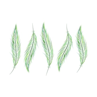 Set of feathers are hand-drawn on a white background.