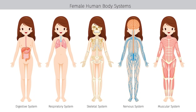 Set of female human anatomy, body systems