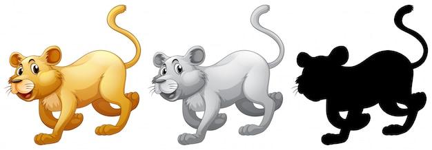 Set of female lion