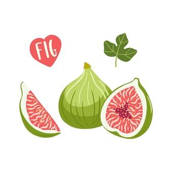 Set of fig fruit illustrations.