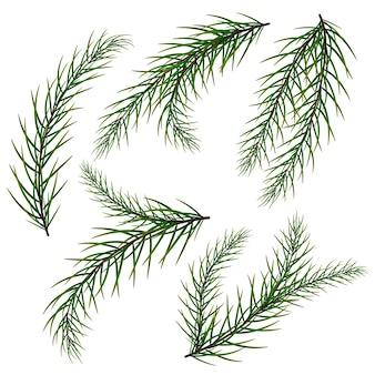 A set of fir branches