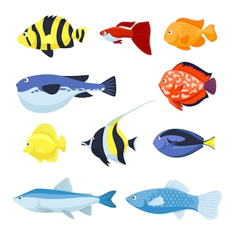 Set of fish for aquarium, sea and river animals illustration